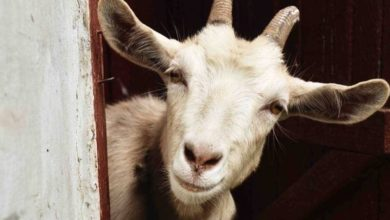 Photo of Are You a Scapegoat?
